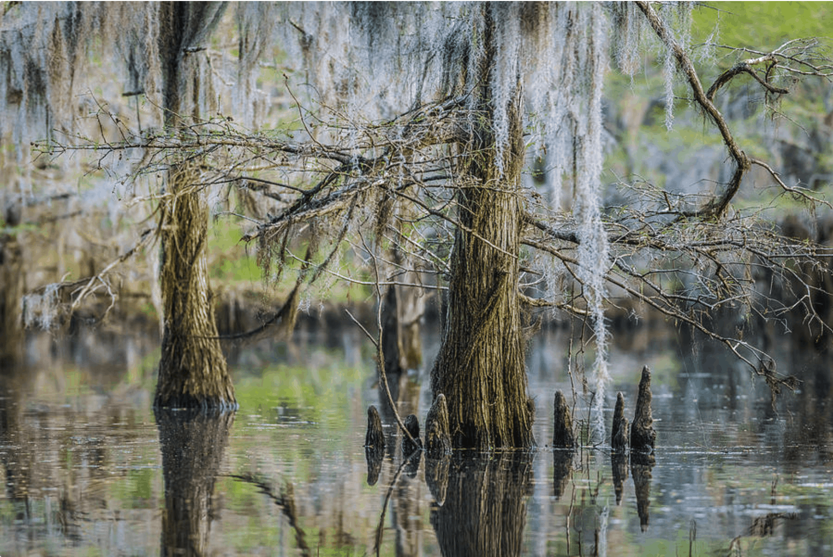 Caddo Lake FPO image