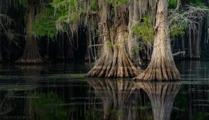 Caddo Lake 2020